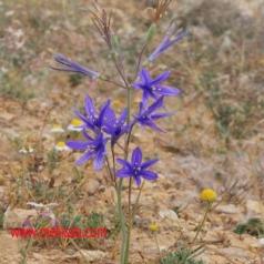 خصوصیات گیاهشناسی گل خیار